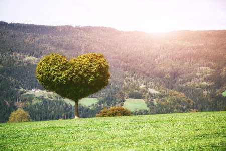 Tree growing in shape of heart. Symbol of love and ecology