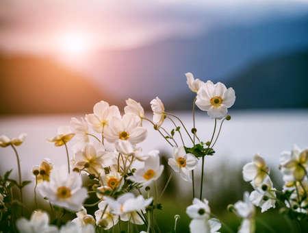 tender white flowers in sunlight Imagens