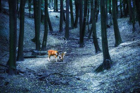 Magical deer with antlers in wild forest Banco de Imagens
