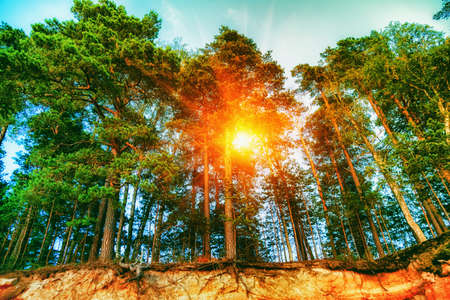 Sunny day in spring forest. Ground with visible roots Stock Photo