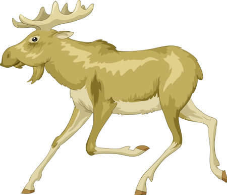 elk horn: Running moose on a white background