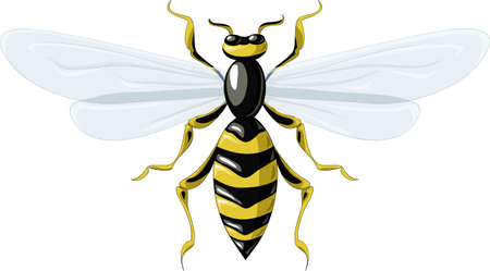 Wasp on a white background Vector