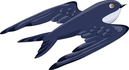 Flying Swallow sur un fond blanc