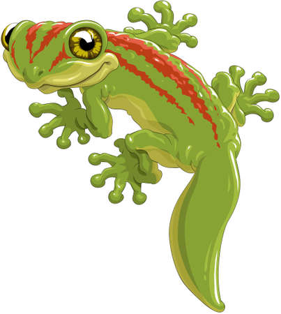 Cute green lizard a gecko Vector