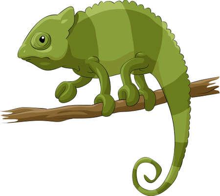 creeps: Chameleon sobre un fondo blanco, ilustraci�n de vectores
