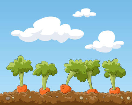clouds: garden: Cartoon garden bed with carrots, illustration