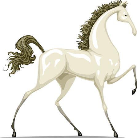 an ungulate: Il cavallo bianco  Vettoriali