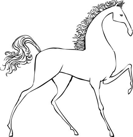 white horse: Drawing a horse Illustration