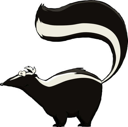 Skunk on a white background, vector illustration