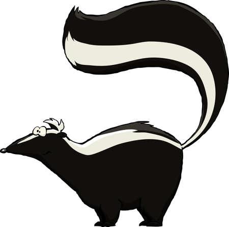 zorrillo: Skunk sobre un fondo blanco, ilustración vectorial