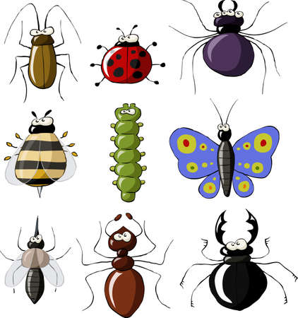 Insects on a white background, vector illustration Vector