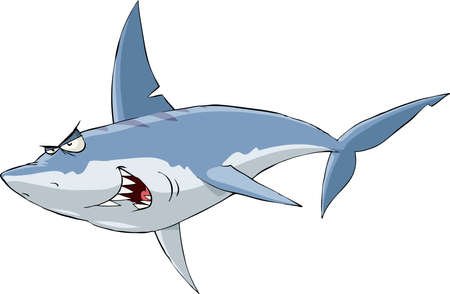 Shark on a white background Vector