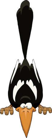 cuervo: Urraca sobre un fondo blanco, ilustración vectorial