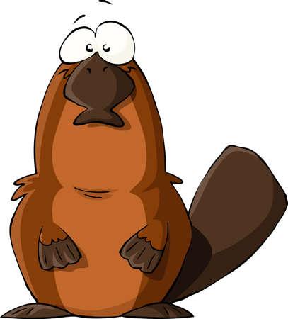 nutria caricatura: Platypus sobre un fondo blanco, ilustración vectorial
