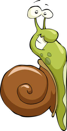 snail: Snail on a white background, vector illustration