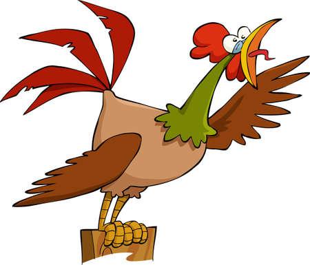pollo caricatura: Gallo sobre un fondo blanco, ilustración vectorial Vectores