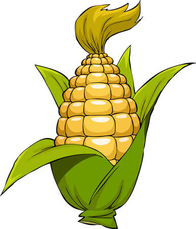 El maíz sobre un fondo blanco, ilustración vectorial Ilustración de vector