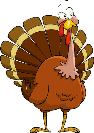 fowl: Turkey on a white background, vector illustration Illustration