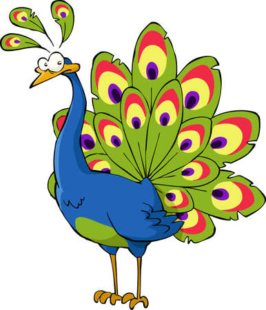 pavo real: Pavo real sobre un fondo blanco, ilustraci�n vectorial