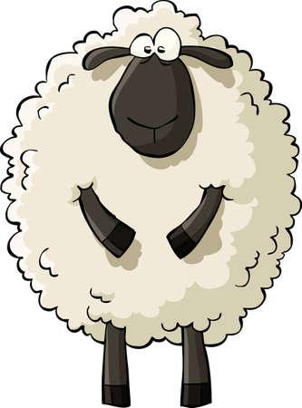 mouton cartoon: Moutons sur une illustration vectorielle fond blanc