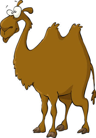 camels: Camel on a white background  Illustration