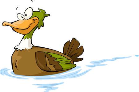 ducks water: Floating duck on a white background illustration Illustration