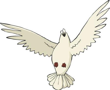 paloma caricatura: Paloma sobre una ilustración de fondo blanco Vectores