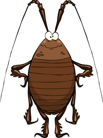 Cockroach on a white background Vector