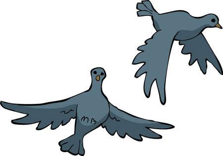 paloma caricatura: Dos palomas en una ilustración de fondo blanco