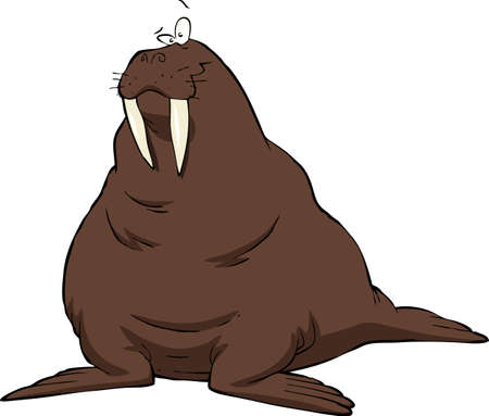 the walrus: Walrus on a white background