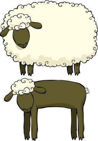 lamb: Due pecore su uno sfondo bianco illustrazione