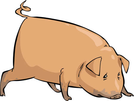 swine: Pig on a white background illustration