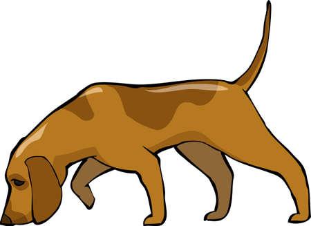 perro de caza: Bloodhound perro sobre fondo blanco Ilustración Vectores