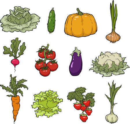 radish: Set of vegetables on a white background vector illustration