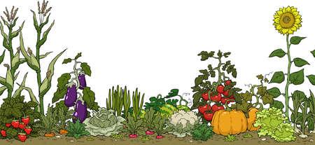 白い背景ベクトル イラストに野菜の庭のベッド