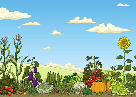 vegetable: Landscape with vegetable garden bed vector illustration