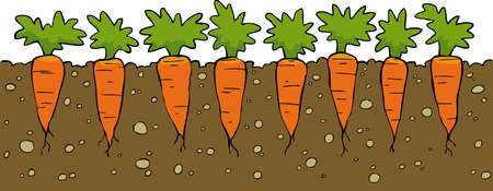 cartoon land: A bed of carrot on a white background vector illustration