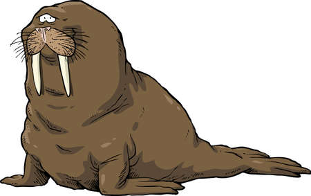whisker characters: Walrus on a white background vector illustration Illustration
