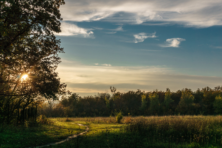 walking paths: Sunset in the park, walking paths, trees, blue sky