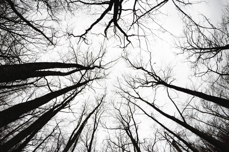 the view from below: Bare autumn trees view from below concept Stock Photo