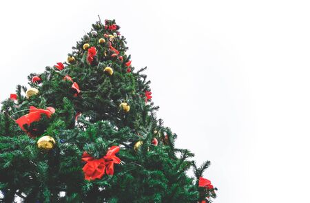 large outdoor Christmas tree against a white sky view from below Stock Photo