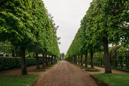 Landscaping decorative design. Raws of trees in park alley with pathways at Petergof or Peterhof Palace at summer in cloudy day Imagens