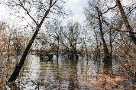 Flood, trees in water, wooden roof of Christian gazebo sticks out of the river, spring time