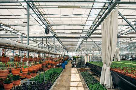 Modern hydroponic greenhouse nursery or glasshouse, industrial horticulture, cultivation of seedlings technology concept Reklamní fotografie