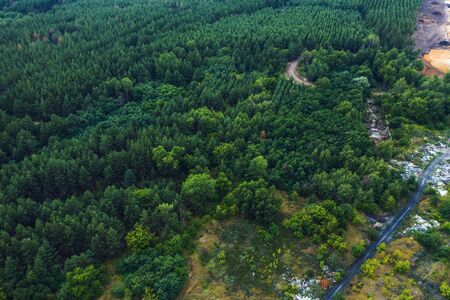 Aerial view of summer green forest with trees panorama, drone photo.