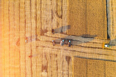 Summer harvesting of wheat in ripe field. Agriculture combine harvesters machines at work, aerial view.