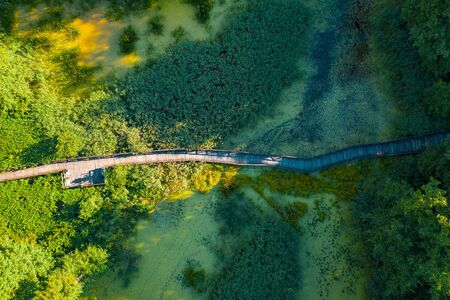 Aerial top view of wooden footbridge pathway over marshy or swampy river with vegetation thickets and green forest, summer travel concept 免版税图像