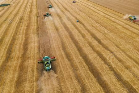 Combine harvesters gathers wheat at on yellow grain field in sunlight, aerial view from drone, agriculture crop season with machinery work.