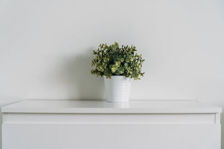 Green artificial plant on white wall background, minimalist style.