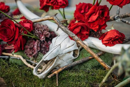 Skull of animal with horns and red roses flowers on green grass background, close up.